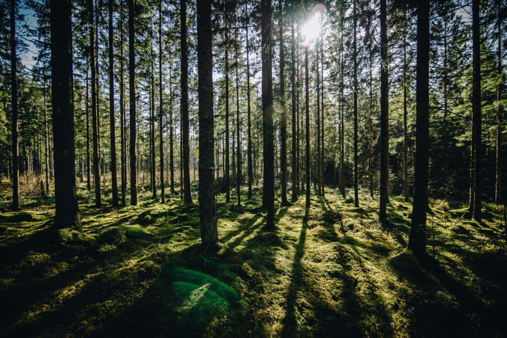 """Wälder"