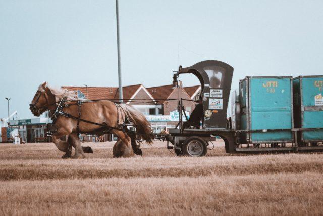 Pferdekutschen statt Autos auf Juist