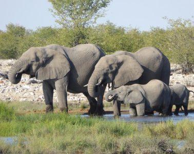 Urlaub in Namibia