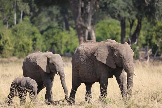 Elefanten im Masaai Mara Nationalreservat