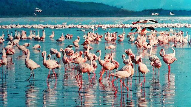 Der Nakuru See in Kenia