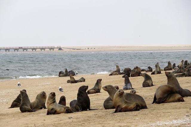 Robben Kolonie