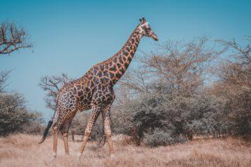 10 Tipps für urlaub im Senegal
