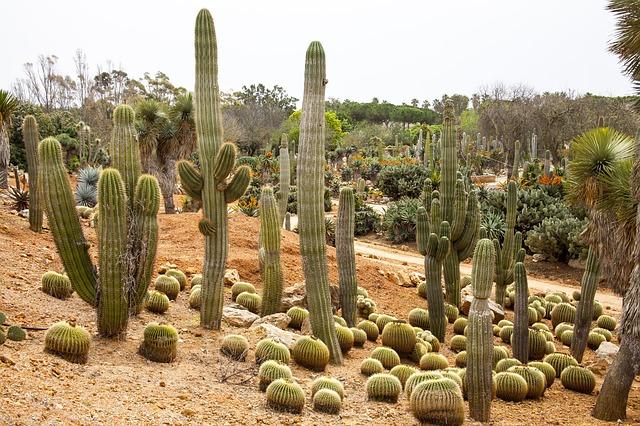 Botanischer Garten Mallorca