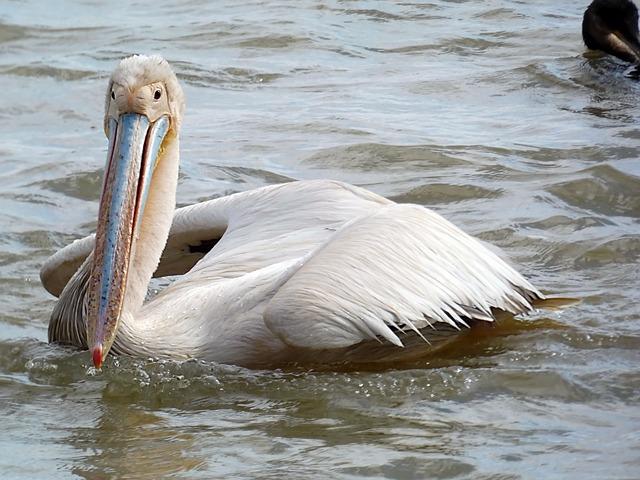 Vögel im Naturreservat Djouj