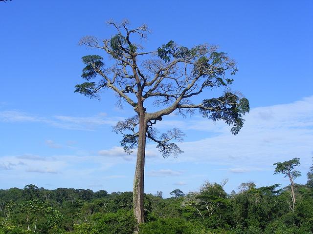 Waza Nationalpark
