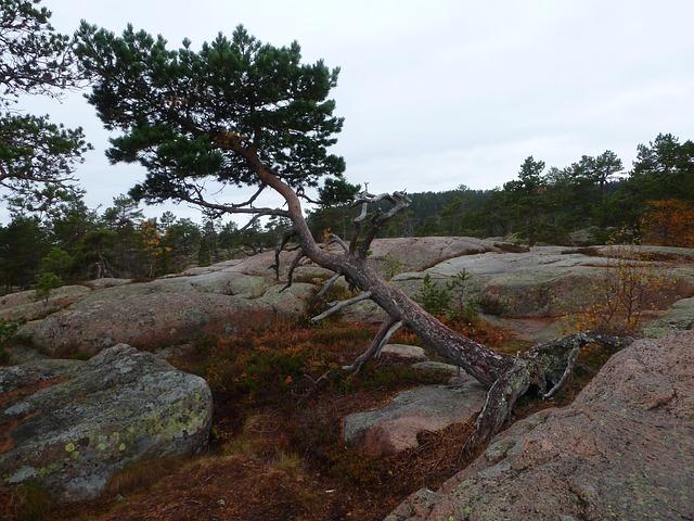 Schwedischer National Park