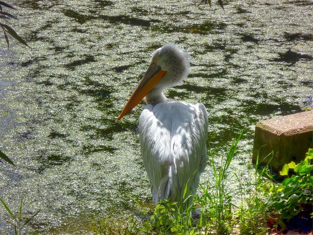 Das Pongoland im Zoo Leipzig