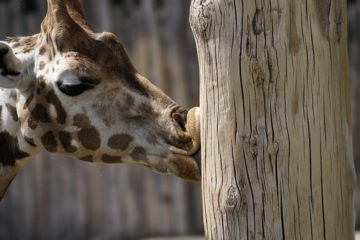 Der Zoo Leipzig - 10 Tipps für deinen Besuch im Zoo